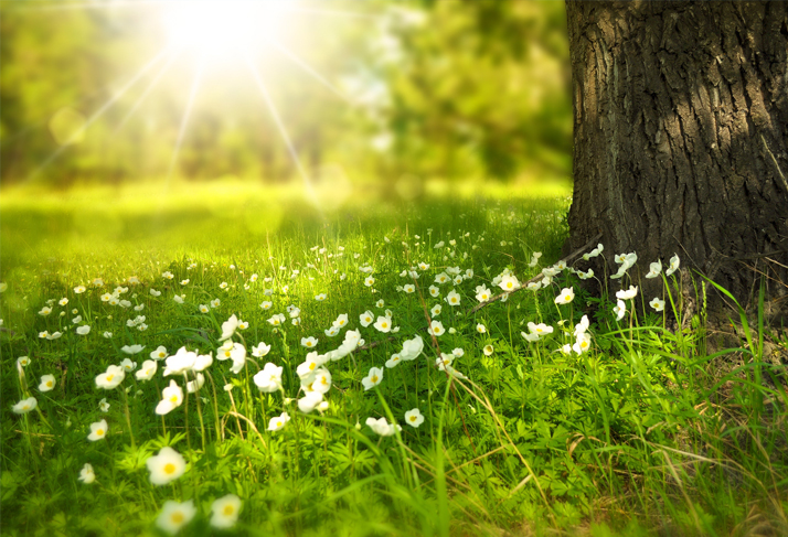 Belső Tavasz – 4 alkalmas szomato-fókusz workshop